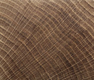End grain wood texture Royalty Free Stock Photo
