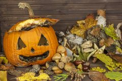 End of Halloween, moldy pumpkin. Remembering Halloween. Head carved from a pumpkin on Halloween. Stock Image