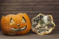 End of Halloween, moldy pumpkin. Remembering Halloween. Head carved from a pumpkin on Halloween. Royalty Free Stock Image