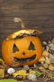 End of Halloween, moldy pumpkin. Remembering Halloween. Head carved from a pumpkin on Halloween. Royalty Free Stock Images