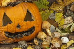 End of Halloween, moldy pumpkin. Remembering Halloween. Head carved from a pumpkin on Halloween. Stock Photo