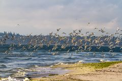 The end of the Kinburn spit, Mykolayiv region, Ukraine. Sea, sand, seagulls. Ukrainian native landscapes royalty free stock photos