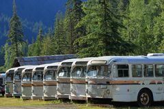 End of the Line - Historic Buses at Sandon, B.C. royalty free stock images