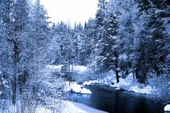 Free End Of Evening In Deep Forest Royalty Free Stock Images - 7537859