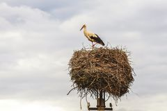Stork sits proudly in the socket at the end of the pole. At the end of the post, a stork in a nest Stock Photo
