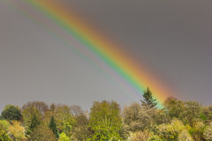 Rainbow hits Tree (landscape) Stock Images