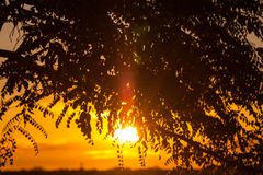 End of a Safari-day, Sunset behind Tree in Africa Stock Images