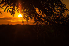 End of a Safari-day, Sunset behind Tree in Africa Royalty Free Stock Photography
