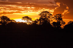 End of a Safari-day, Sunset behind Trees in Africa Stock Photos