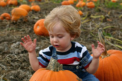 The end of the search. A toddler looks at a pumpkin in a pumpkin patch stock photography