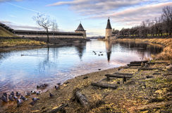 End of the season. January pigeons bathing in the river Pskov Royalty Free Stock Photos