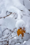 End of a season. A stubborn leaf. one of the last traces of fall being swallowed up by early winter snow storms Royalty Free Stock Photography