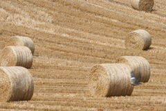 The end of summer. Successful harvesting finishes difficult year of a very hard work. Farmers are happiest people all over the world Royalty Free Stock Photography