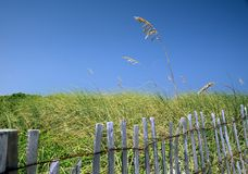 End of Summer. A fence keeps beach-goers off the new plantings and guides them to the beach in Florida and a grass frond waves in the breeze Stock Image
