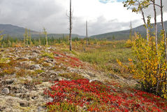 Colorful tundra. Royalty Free Stock Photo
