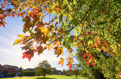 End of summer leaves Royalty Free Stock Image