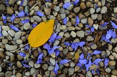 Litter fall Royalty Free Stock Images