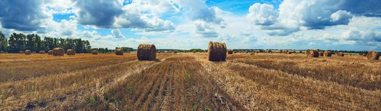 Panorama of straw bales in empty field after harvesting time on a background of dark dramatic clouds in overcast sky. stock photos