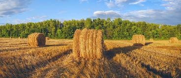 Panorama of golden hay bales on the farm field after harvesting illuminated by the last rays of setting sun. royalty free stock photo
