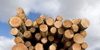 End of tree logs Stock Photo