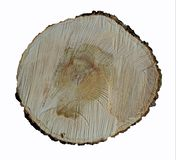 The end of a tree trunk cut by a chainsaw is a maple. Terstura tree, tree rings and traces of chainsaw. Circle wheel stock photography
