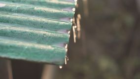 The end of winter. Meltwater drips from the roof in a sunny day. Snow melt on roof. Water drop in thaw winter spring season stock footage