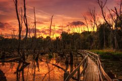 End of the world. Wooden bridge over wetland at purple sunset Royalty Free Stock Photography