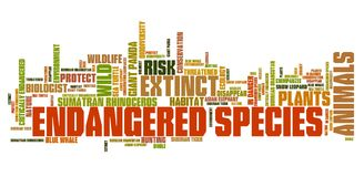 Endangered animals. Endangered species - environment issues and concepts word cloud illustration. Word collage concept Royalty Free Stock Photo