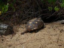 Tortoise walking on the sand on a beach Stock Photos