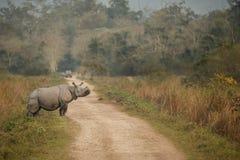 Endangered indian rhinoceros in the nature habitat. Kaziranga national park in India, indian wildlife and nature, assam state Stock Images
