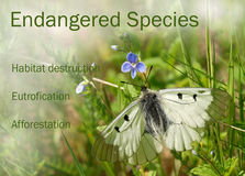 Endangered species Stock Image