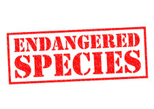 ENDANGERED SPECIES Royalty Free Stock Image