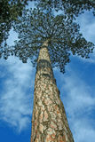 Ende des Waldes Stockbilder