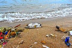 Endecha de los pescados del fumador del mar muerta en la costa fotografía de archivo