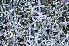 Endecha del plano de la planta de Frost Fondo frío agradable de la mañana del invierno Foto de archivo