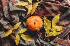 Endecha del plano del feliz Halloween o de la acción de gracias calabaza de otoño con el co Foto de archivo libre de regalías