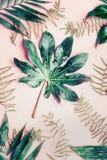 Endecha plana creativa con las diversas hojas de palma tropicales en fondo del rosa en colores pastel Foto de archivo
