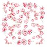 Endecha plana floral con las flores rosadas en el fondo blanco, visión superior Imagen de archivo