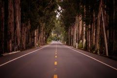 Endeless droga w Ekwador podczas lata Obraz Royalty Free