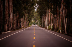 Endeless road in Ecuador during summer Royalty Free Stock Image