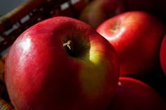 Red Apples During the Golden Hour stock photo