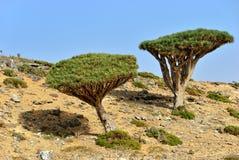 Socotra island Stock Images