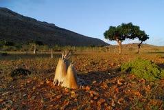 Socotra island Stock Image
