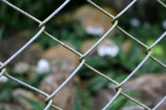 Endemic white orchids in the cage. Stock Photo