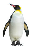 Endemicart av antarcticen Royaltyfri Bild