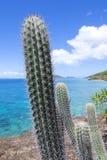 Endemiczny Karaibski kaktus Isla Culebra Fotografia Royalty Free