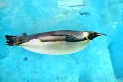 Endemische Spezies der Antarktis Stockfotografie