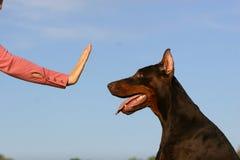 Endhund Lizenzfreie Stockfotos