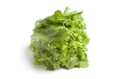 Endibia verde fresca imagen de archivo libre de regalías