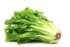 Free Endive Royalty Free Stock Images - 14506499